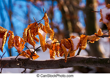 brown foliage on the branch in winter. beautiful nature...