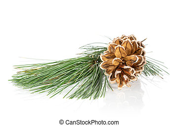 Brown forest pine cone isolated on white