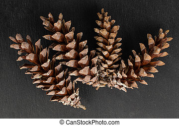Brown forest pine cone on grey stone