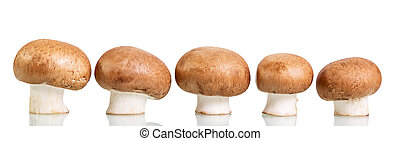 Brown fresh mushrooms champignons isolated on white.