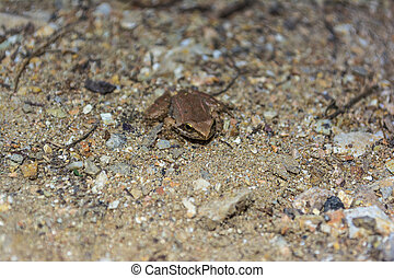 Brown Frog sits on a rock