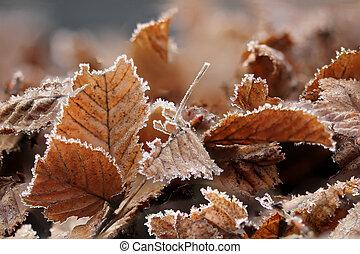 Brown Frozen leaves