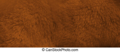Brown fur background close up view. Banner