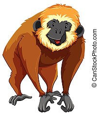 Brown gibbon with happy face