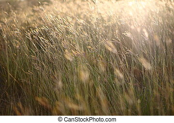 brown grass with sunshine