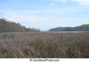 brown grasses or plants with river water and trees