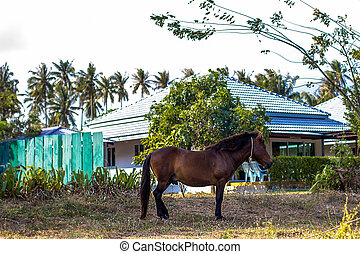 brown grazing horse on the grass