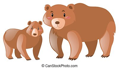 Brown grizzly bear on white background