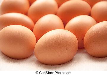 Brown hens Eggs