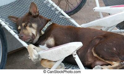Brown homeless dog sleeping in plastic armchair - Brown...