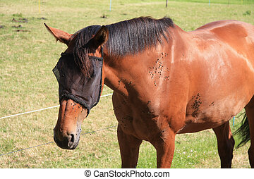 brown horse attacked by flies