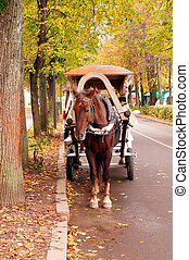 Brown horse-drawn wagon in the autumn alley