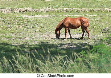horse eating grass in farm