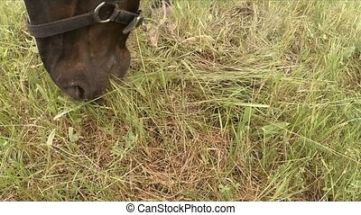 Brown Horse Eating Grass On Meadow