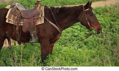 brown horse eating green grass - Brown horse eating grass...