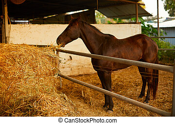 Brown horse eating hay in horse stable