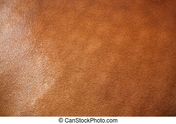 Brown horse fur close up - Brown horse shiny fur close up