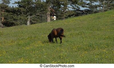 Brown Horse Grazing in a Field
