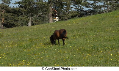 Brown Horse Grazing in a Field