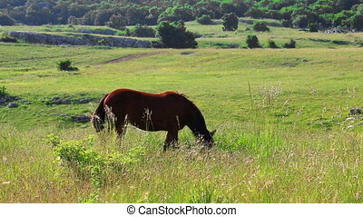 Brown horse grazing in countryside, village at distance