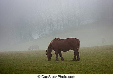Brown horse in a fog