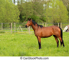 brown horse in a green meadow
