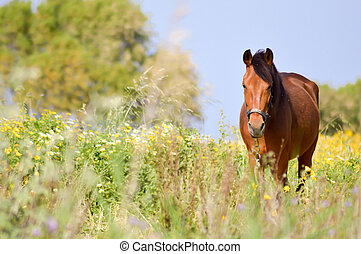 Brown horse in a meadow filled with