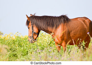 Brown horse in a meadow filled