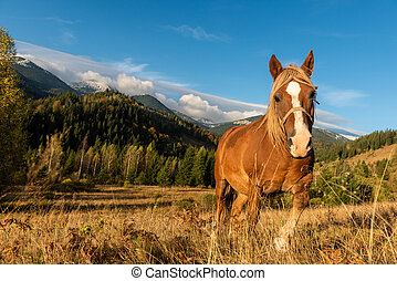 Brown horse in a meadow in mountain valley