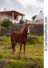 Brown horse in a meadow near the house in the village. Mykonos.