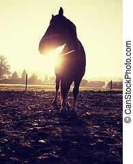 Brown horse in morning sun. Mountain horse farm