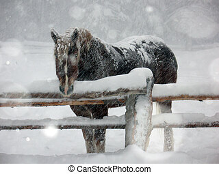 Brown horse in snow storm