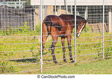 Brown horse in the cage