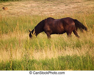 brown horse in the field
