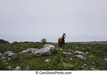 Brown horse in the landscape