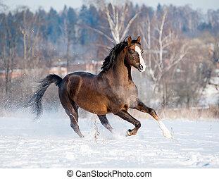 brown horse in winter - outstanding welsh pony in winter...