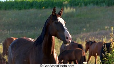 Brown horse is chewing. Animals on a meadow. Wild herd near...