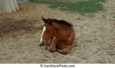 Brown horse lies on the sand. - Brown horse lies on the sand...