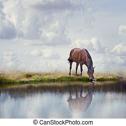 Brown horse near water