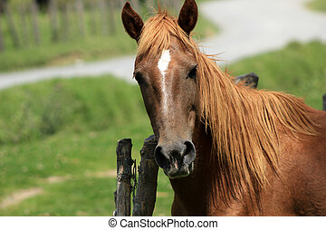 A brown horse standing next to a fence in a farmers pasture in Cotacachi, Ecuador