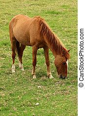 Brown Horse on a Farm