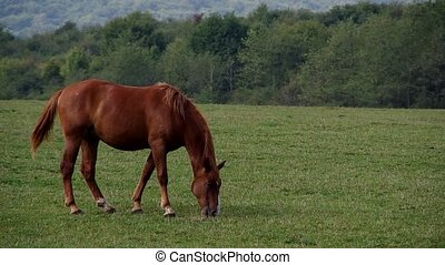 Brown horse on a green field