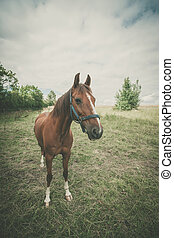 Brown horse on a green meadow
