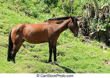 Brown Horse on a Hill