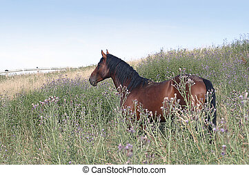 brown horse on a meadow