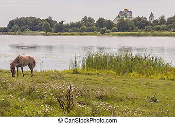 Brown horse on coast of lake - Ostroh, Ukraine.