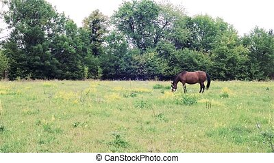 Brown horse pasture outdoor. beautiful horse in the pasture