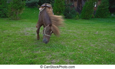 Brown horse pony with a big mane