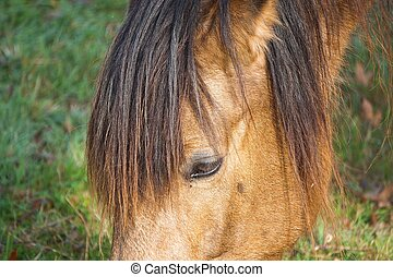 brown horse portrait in the nature