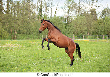 brown horse prancing in a meadow in spring